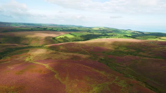 united kingdom, devon, exmoor national park, moorland - exmoor national park stock videos & royalty-free footage