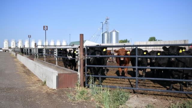 university of saskatchewan's livestock and forage centre of excellence in saskatoon saskatchewan canada on wednesday september 18 2019 - saskatchewan stock videos and b-roll footage