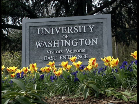 stockvideo's en b-roll-footage met university of washington sign near yellow and red tulips - universiteit van washington