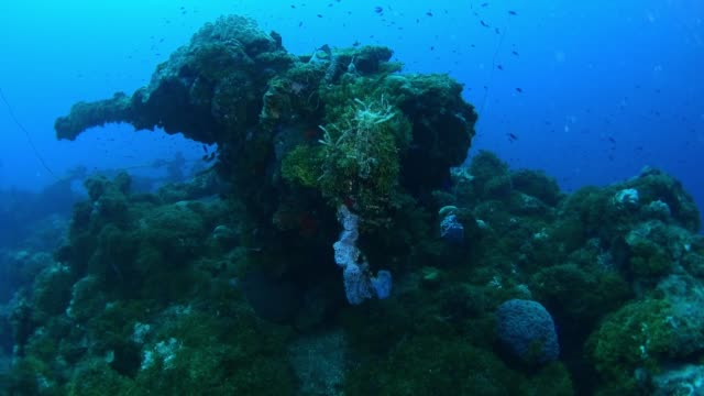 unkai maru bow gun with gas masks, underwater wrecks, truk lagoon, chuuk micronesia - 1944 stock videos & royalty-free footage