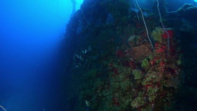 unkai maru, underwater wrecks, truk lagoon, chuuk micronesia - 1944 stock videos & royalty-free footage