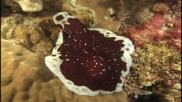 unknown invertebrate species (unknown species). reef. papua new guinea - invertebrate stock videos & royalty-free footage