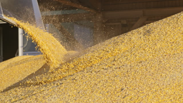 ws unloading corn from a tractor's trailer - storage compartment stock videos and b-roll footage