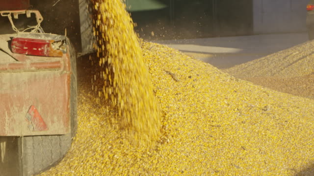 ls unloading corn in an agricultural storage facility - compartment stock videos & royalty-free footage