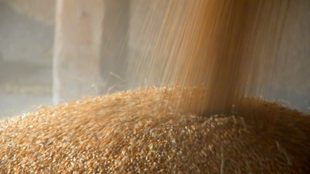 unloading of grain - poland stock videos and b-roll footage