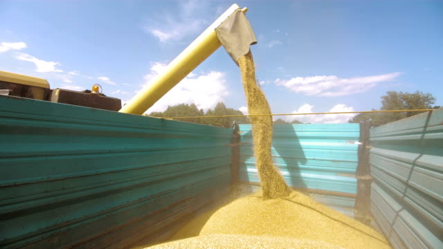 unloading wheat grain - cereal plant stock videos & royalty-free footage