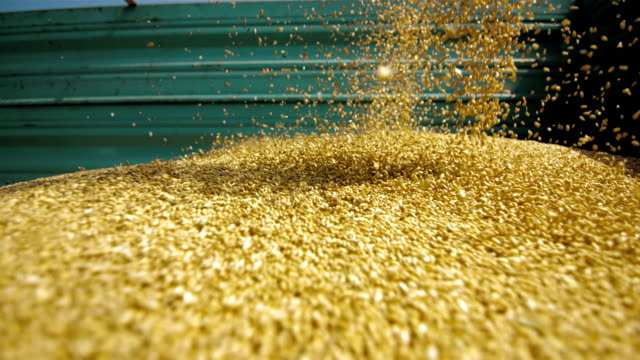 unloading wheat grain (super slow motion) - unloading stock videos & royalty-free footage