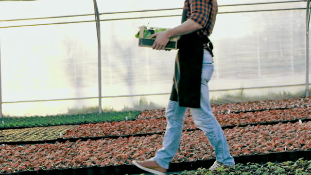 SLO MO DS Unrecognizable farmer carrying a crate full of vegetables