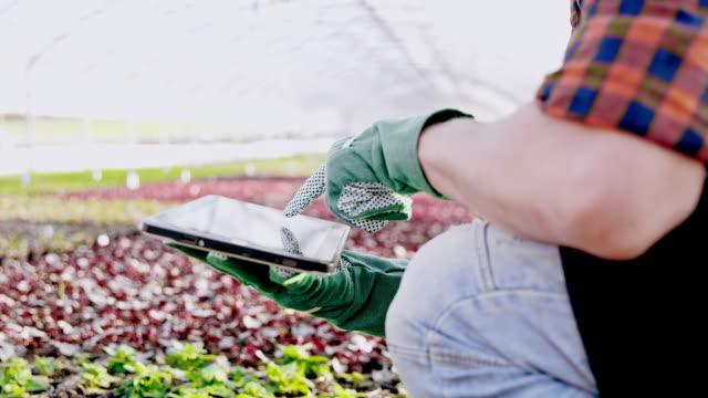 vídeos de stock, filmes e b-roll de florista ds ms irreconhecível, analisando o crescimento na estufa com um tablet - controle