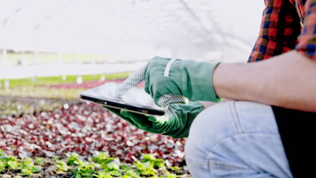 ds ms unrecognizable gardener using a tablet in the greenhouse - gardening glove stock videos & royalty-free footage