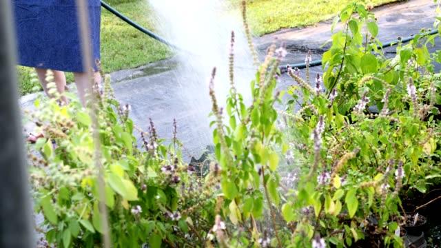 stockvideo's en b-roll-footage met onherkenbaar kwekerij werknemer wateren planten in tuincentrum - kamerplant
