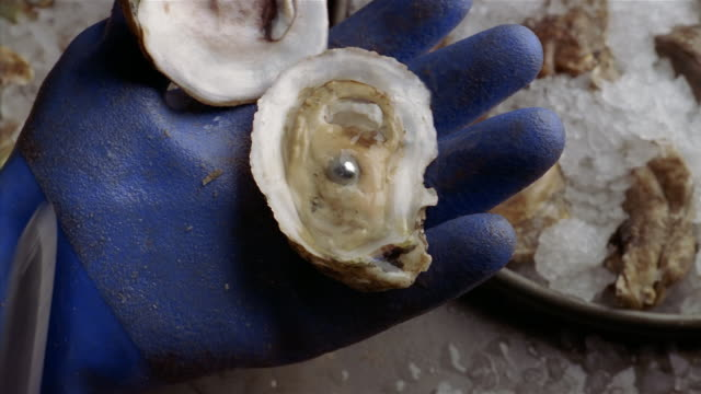 zi, cu unrecognizable person opening oyster with pearl - animal shell stock videos & royalty-free footage