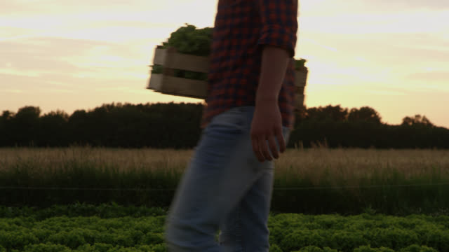 ds unrecognizable vegetable growers carrying wooden crates at dusk - carrying stock videos & royalty-free footage