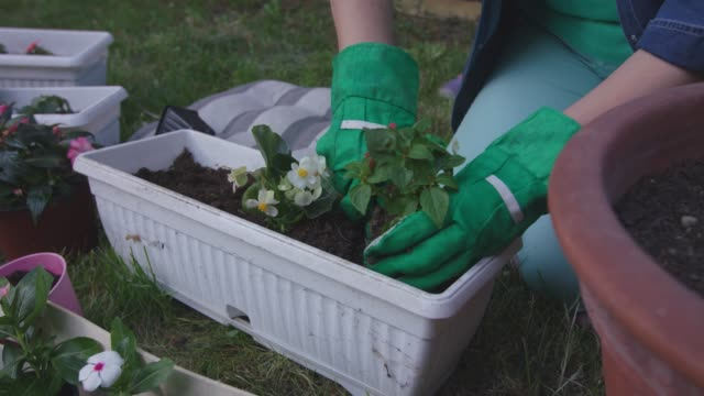 vídeos de stock e filmes b-roll de unrecognizable woman planting flowers with her toddler daughter - glove