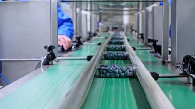 unrecognizable womans working on production line in factory. packing soft fruits. - manufacturing stock videos & royalty-free footage