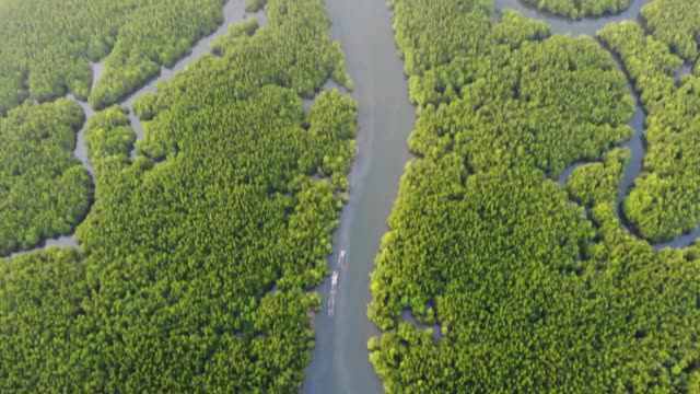 unseen thailand phang nga bay in sunrise - mangrove forest stock videos & royalty-free footage