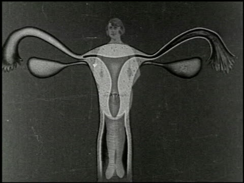 [untitled: part 6: reproductive system and human development] - 2 of 13 - human copulation stock videos and b-roll footage