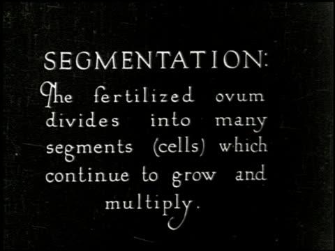 [untitled: part 6: reproductive system and human development] - 6 of 13 - この撮影のクリップをもっと見る 2307点の映像素材/bロール