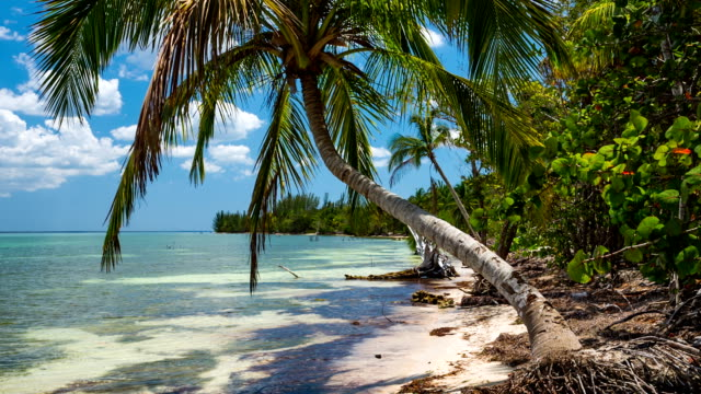 ほぼ手つかずの熱帯のビーチでキューバ - 湾点の映像素材/bロール