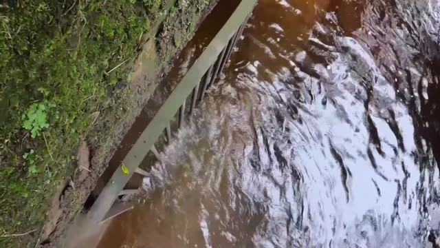 untreated sewage being released into rivers across england and wales england ext general views of river underwater shot of fish on river bed heron... - natural condition stock videos & royalty-free footage