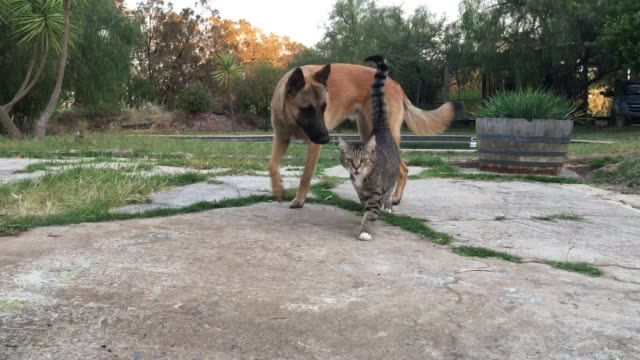 unusual friendships - dog and cat stock videos and b-roll footage