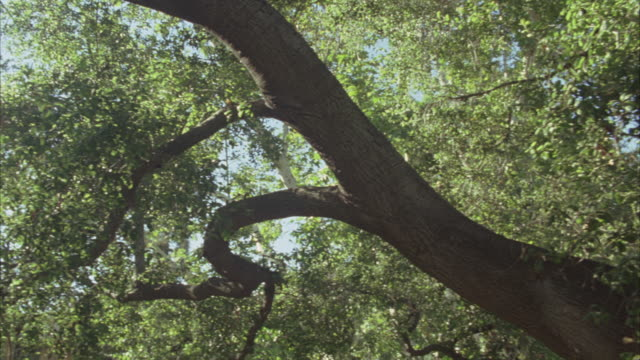 up angle of tree and sunlight - 枝点の映像素材/bロール