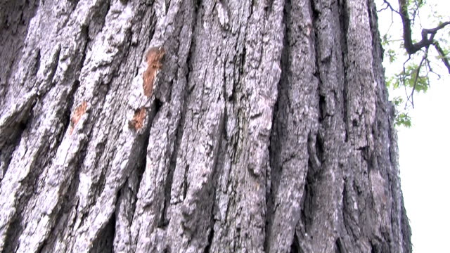 up the spring tree - trunk tree stock videos and b-roll footage