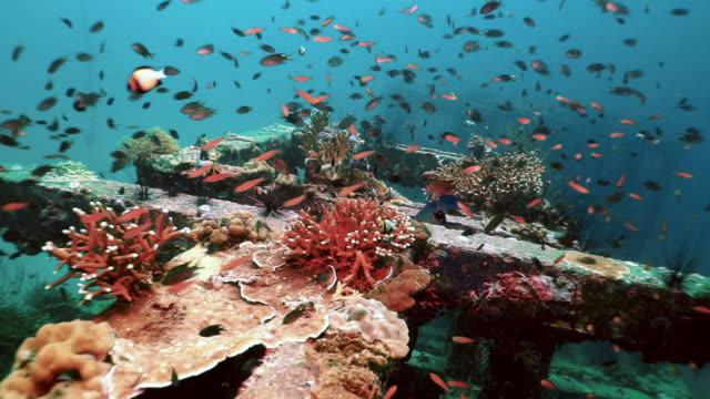 upcycling gammal betong för undervattens korallrev bevarandeprojekt och noll avfall - havsförsurning bildbanksvideor och videomaterial från bakom kulisserna