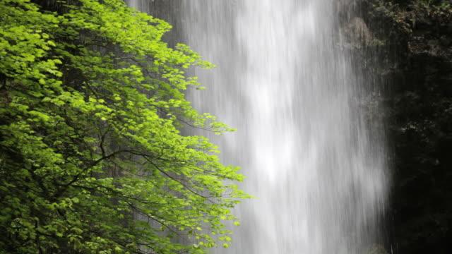 MS, Upper North Falls, Silver Falls State Park, Oregon