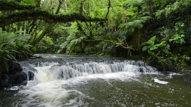 upper purakaunui falls in vital green rainforest, catlins forest.the purakaunui falls are a cascading three-tiered waterfall on the purakaunui river, located in the catlins in the southern south island of new zealand. - flowing stream stock videos & royalty-free footage