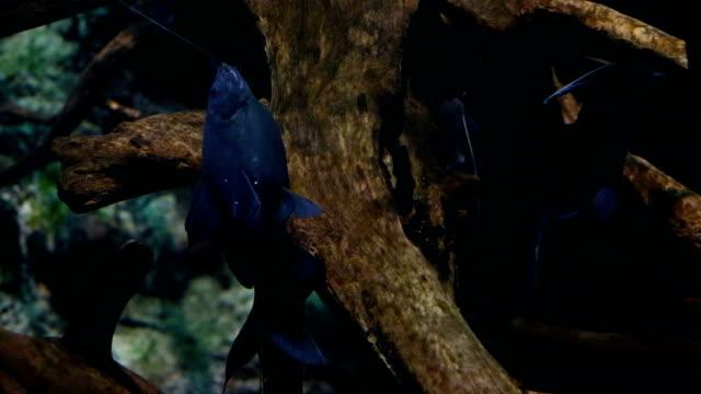 upside down catfish - upside down jellyfish stock videos & royalty-free footage