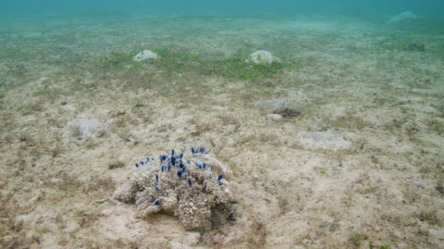 upside-down jellyfish - upside down jellyfish stock videos & royalty-free footage