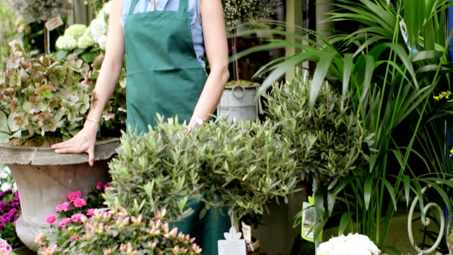 upward panning ms of a senior florist standing proudly at the entrance to her shop - only mature women stock videos & royalty-free footage