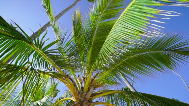 Upward Shot of Palm Fronds