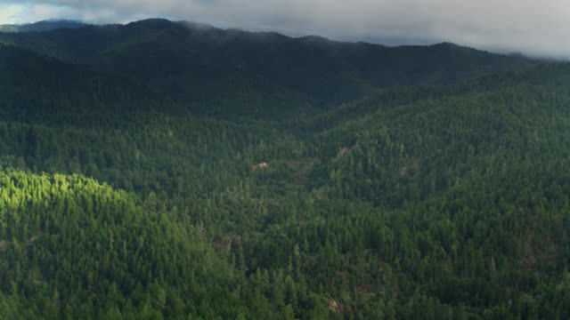 upward tilting drone shot of forest near fort bragg, ca - pazifikküste stock-videos und b-roll-filmmaterial