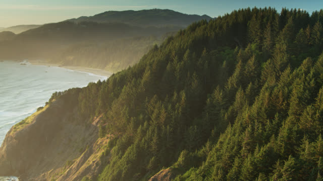 upward tilting drone shot of waves crashing on tree covered cliffs on the oregon coast - oregon coast stock videos & royalty-free footage