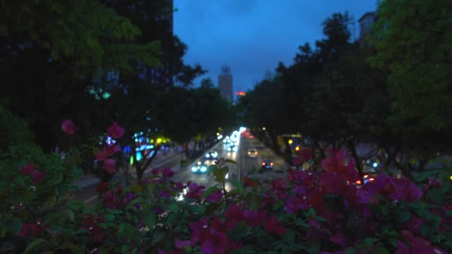 urban boulevard with azalea flowers at dusk - seeing paris: on the boulevards stock videos & royalty-free footage