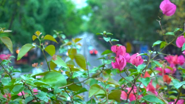 urban boulevard with azalea flowers - seeing paris: on the boulevards stock videos & royalty-free footage