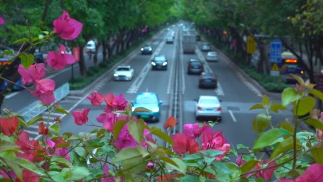 ツツジの花のあるアーバン大通り - 顕花植物点の映像素材/bロール