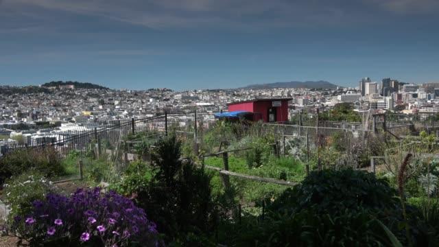 urban community garden - organic urban growth stock videos & royalty-free footage