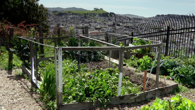 vidéos et rushes de jardin communautaire urban - potager