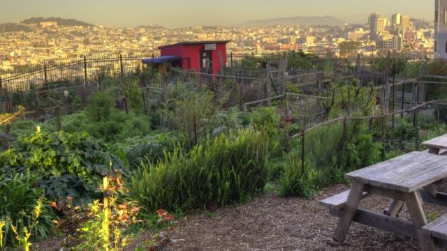 vídeos de stock, filmes e b-roll de comunitária urban garden - orgânico