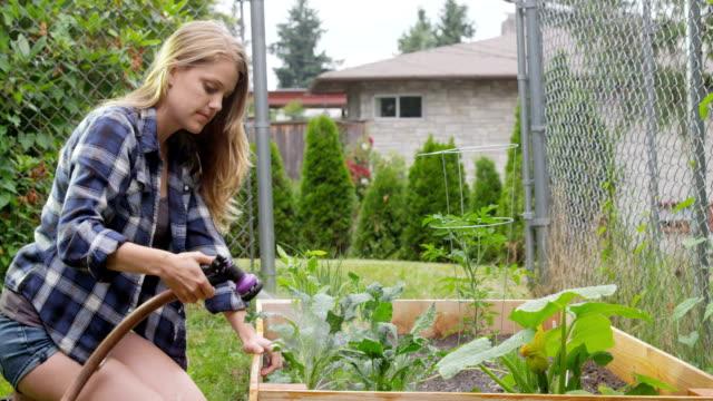 Urban Gärtnern Kale-Verschiedene Aufnahmen