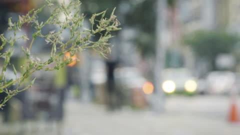 vídeos y material grabado en eventos de stock de urban plant - enfoque en primer plano