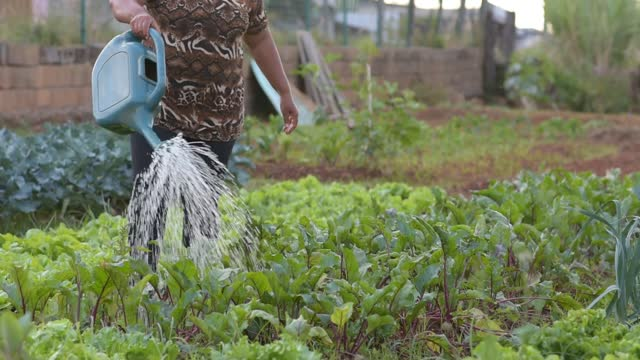 urban vegetable garden - south america stock videos & royalty-free footage