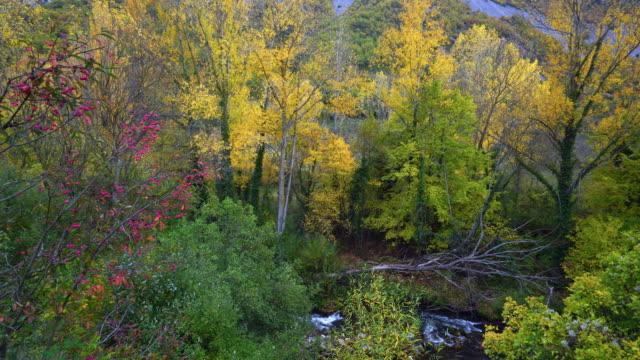 urbasa natural park - comunidad foral de navarra stock videos and b-roll footage