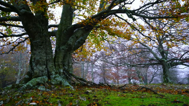 Urbasa Natural Park