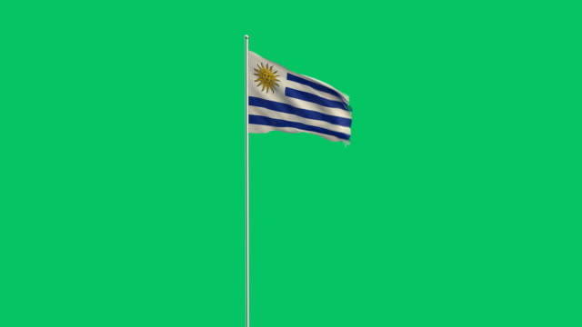 uruguaian flag rising - uruguaian flag stock videos & royalty-free footage