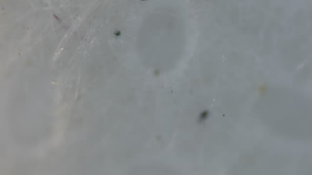 used facemask under light microscopy shows a lot of dirt contamination particles. - piastrina video stock e b–roll