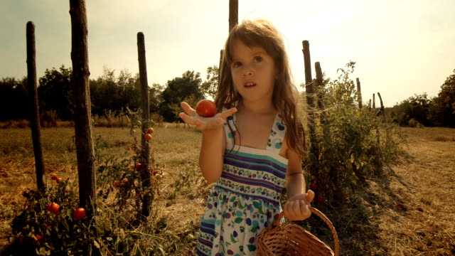 POV, User Generated Content. A Little Girl Learns How  to Pick Tomatoes. Real People, Rural Scene,. Lens Flare, Unusual Angle, GoPro.